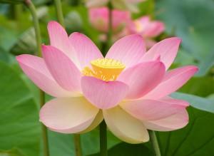 pink-flower-300x219