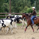 cattle drive cowgirl 6043195994_12608ee0ae
