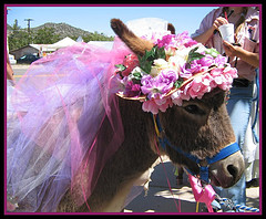 mule pink hat 23123246_bf71f6463e_m